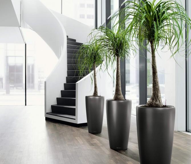 planta6